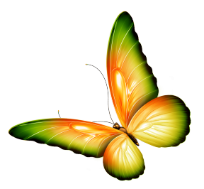 Butterfly Clipart No Background.