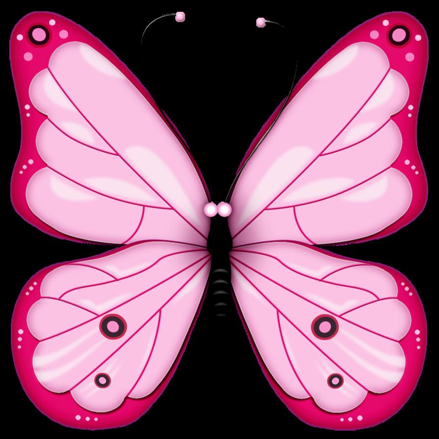 butterflies images.
