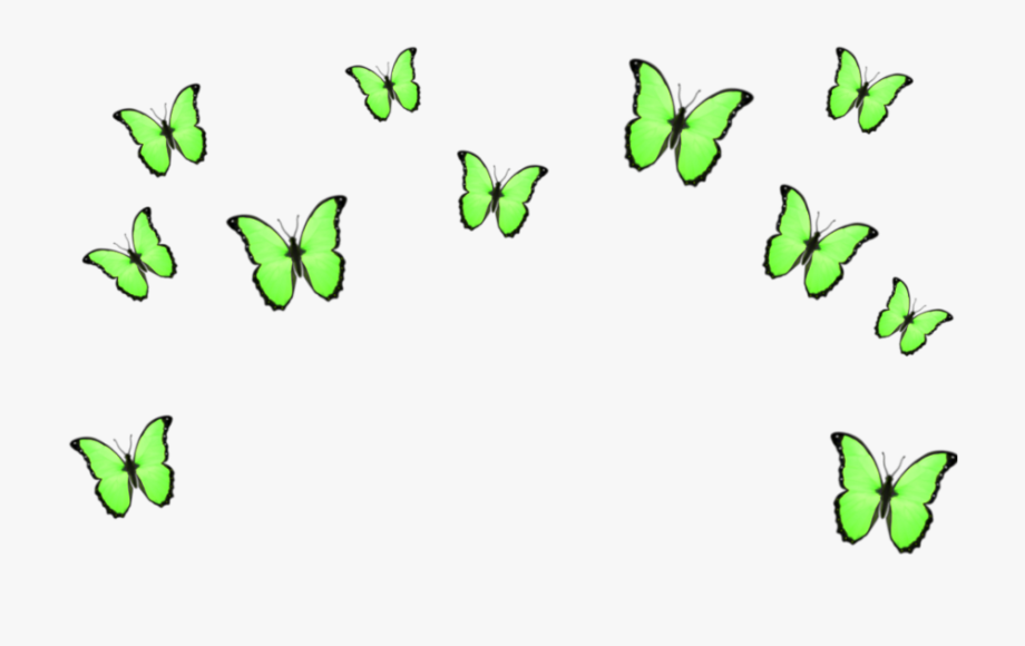 green #butterflies #crowns #crown #aesthetic #tumblr.