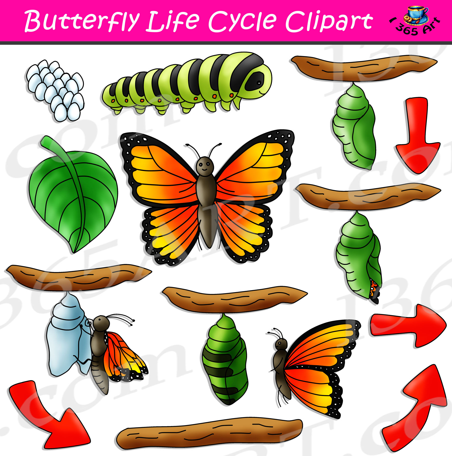 Butterfly Life Cycle Clipart Bundle.