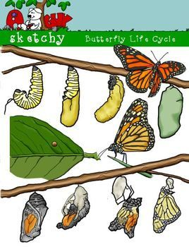 Butterfly / Caterpillar Life Cycle Clipart.