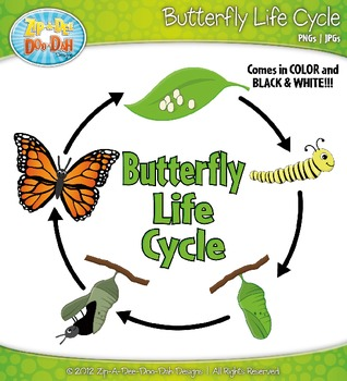 Butterfly Life Cycle Clipart {Zip.