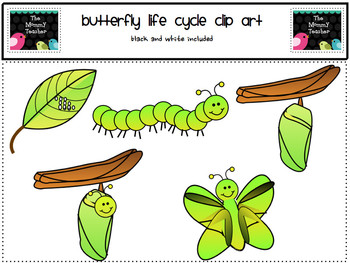 Clip Art: Butterfly Life Cycle ClipArt {Black and White Included}.