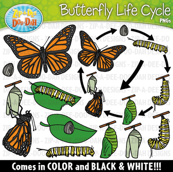 Realistic Butterfly Life Cycle Clipart {Zip.