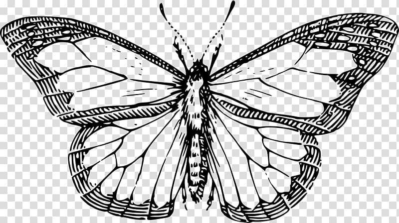 Monarch butterfly Drawing Insect , butterfly transparent.