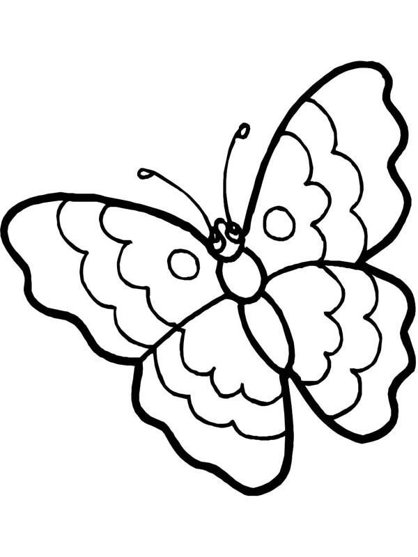 Picture Of A Cartoon Butterfly.