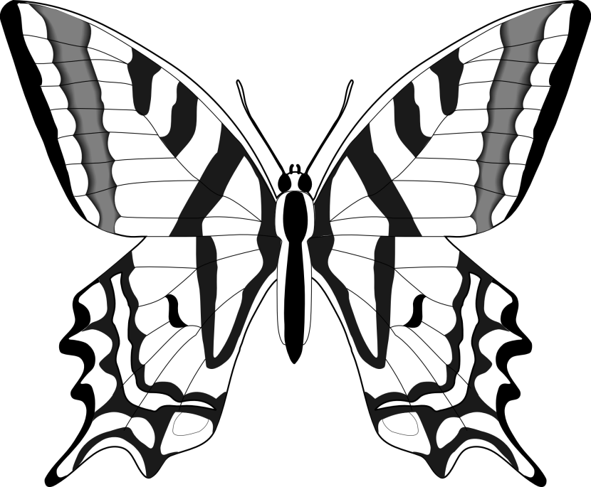 Butterfly black and white butterfly eyes clipart black and white.