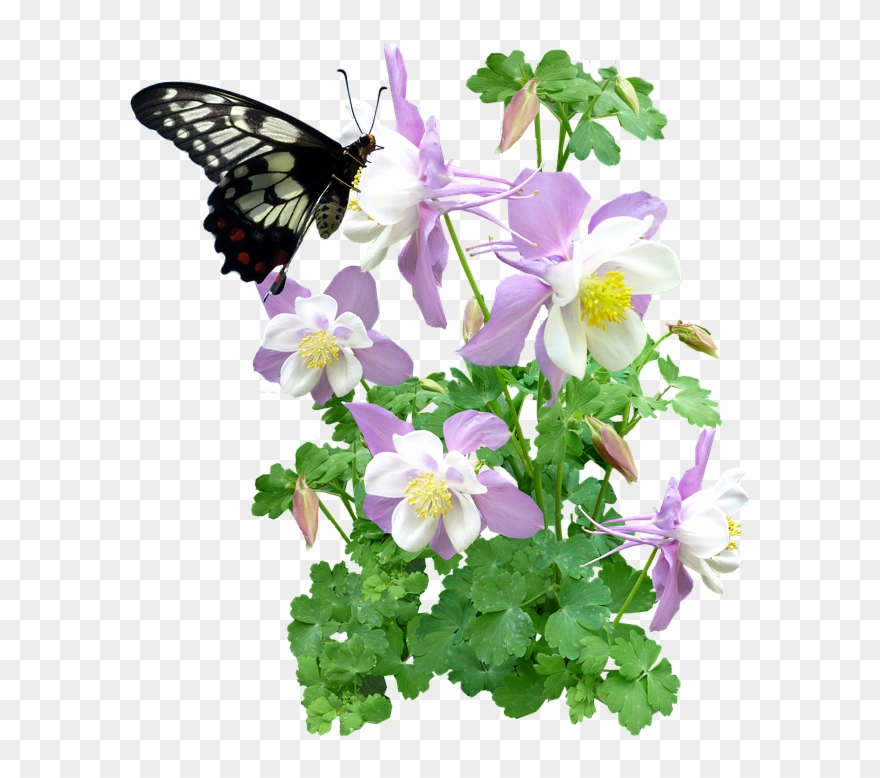 Free Photo Butterfly Flowers Summer Max Pixel.