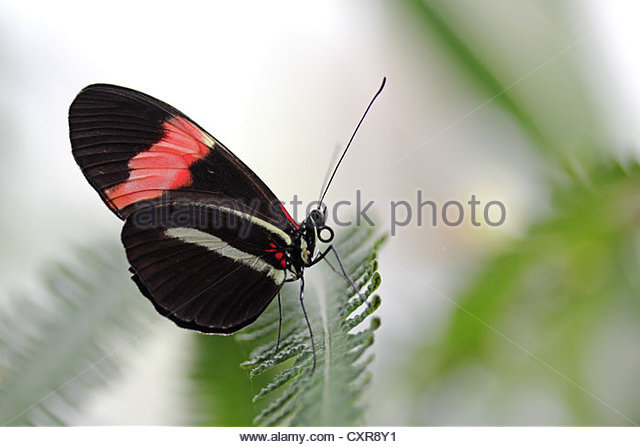 Butterfly House Exterior Stock Photos & Butterfly House Exterior.