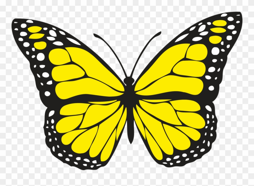 Spiritual Meaning Of Yellow Butterflies.