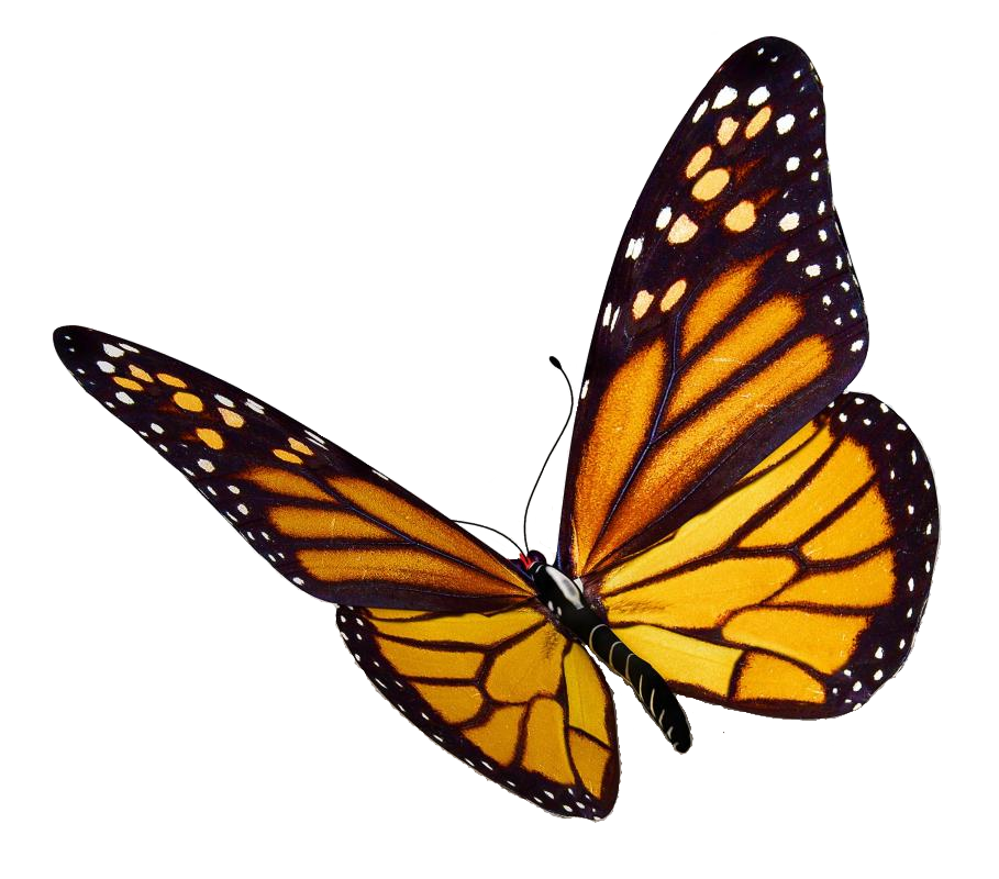 Butterfly PNG Image HD.