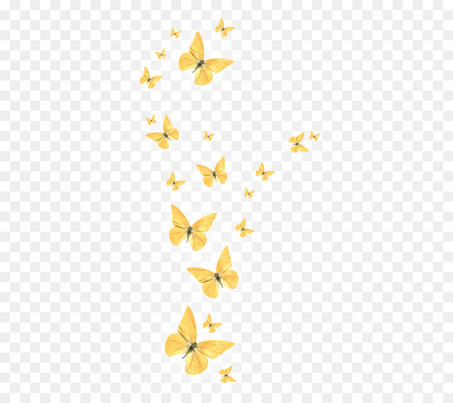 Butterfly Drawing png download.