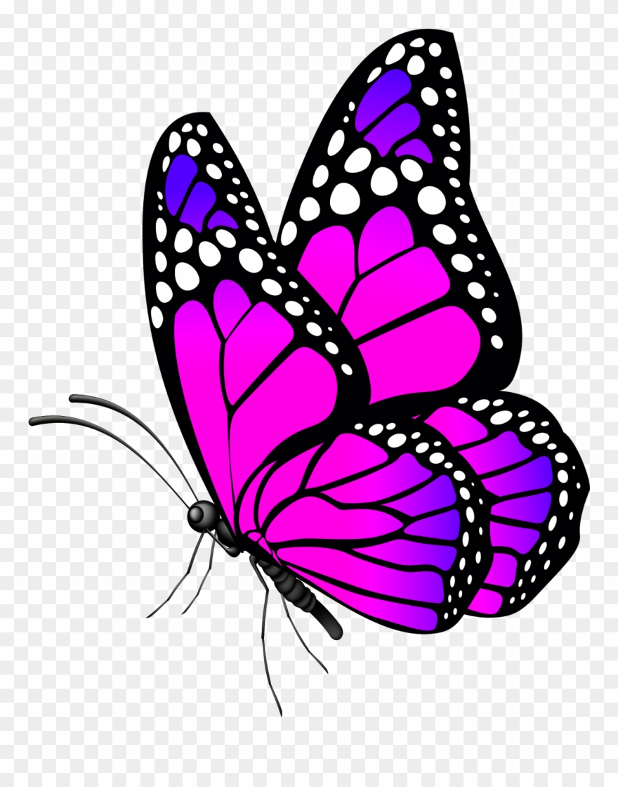 Free Desktop Wallpaper Butterflies Flowers.