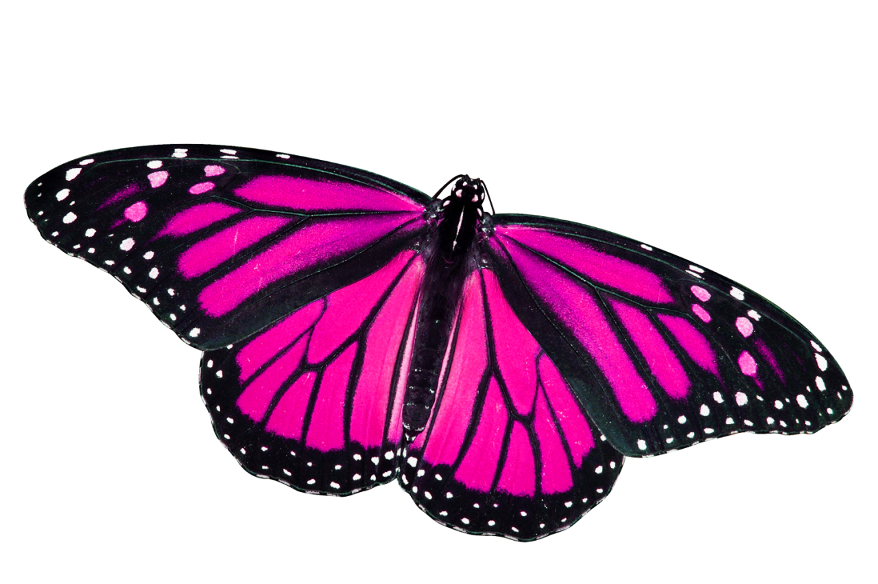 Butterfly PNG File Download Free.