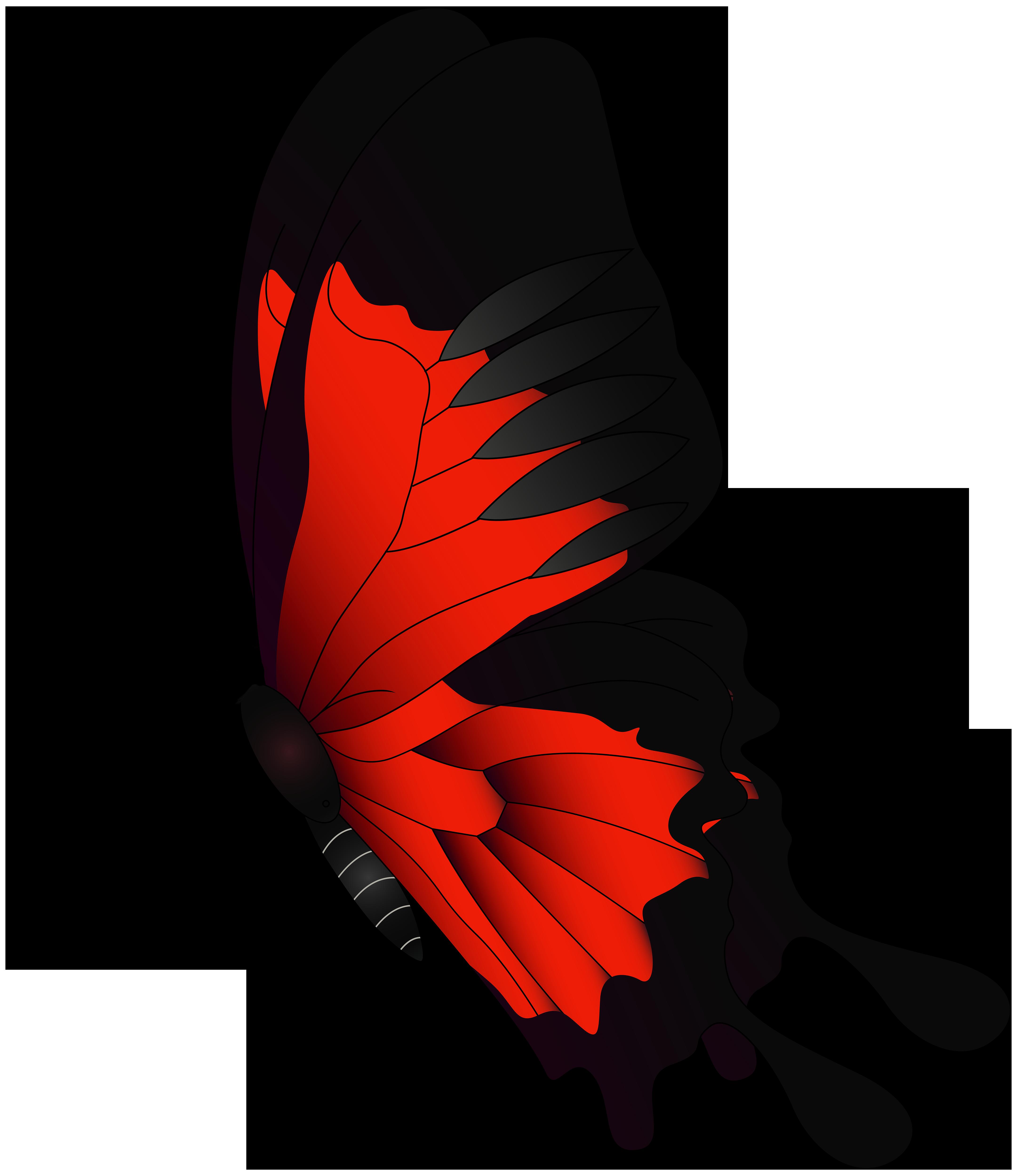 Butterfly Flight.