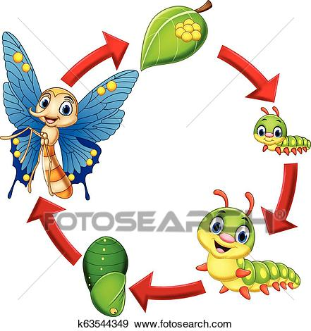 Illustration of butterfly life cycle Clip Art.