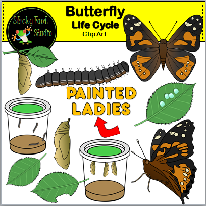 Butterfly Life Cycle Clip Art for Painted Lady Butterflies.