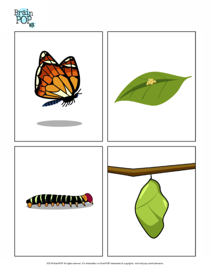 Butterfly Life Cycle Images.