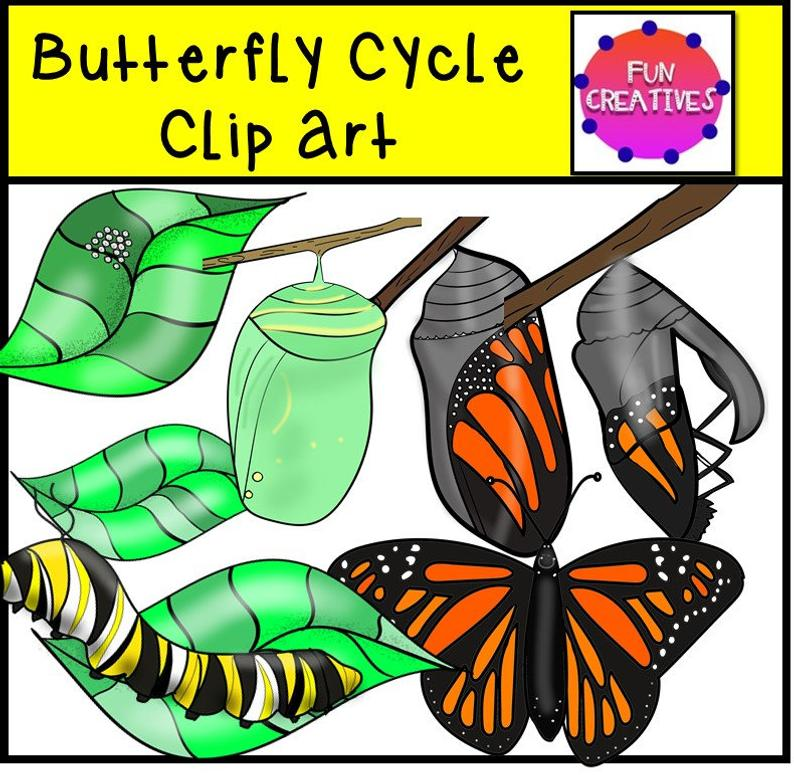 Butterfly Life Cycle Clip Art, Monarch Butterfly life cycle, Monarch life  cycle clip art, Monarch digi clip,.