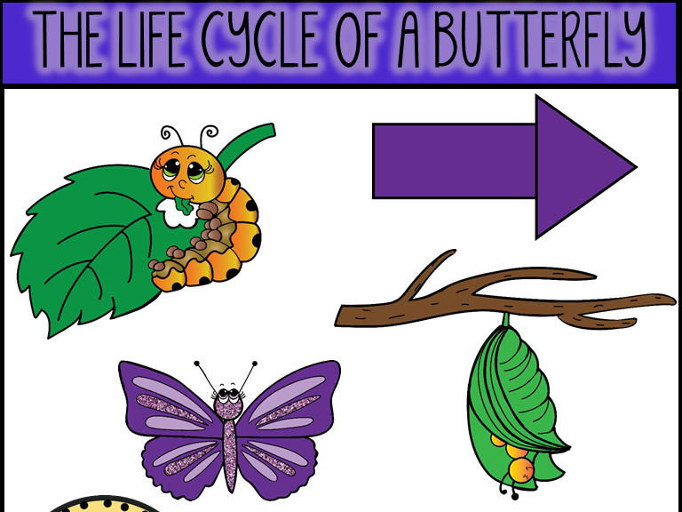 Life Cycle of A Butterfly Clip Art.