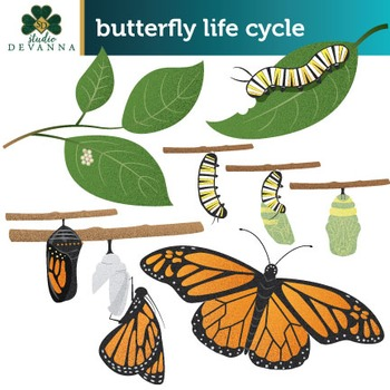 Free Butterfly Life Cycle Clip Art.