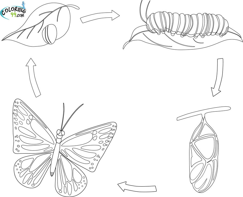 Butterfly Life Cycle Coloring Page.