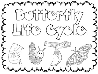 31 best images about butterfly life cycle for preschoolers on.
