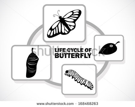 Butterfly Life Cycle Stock Images, Royalty.