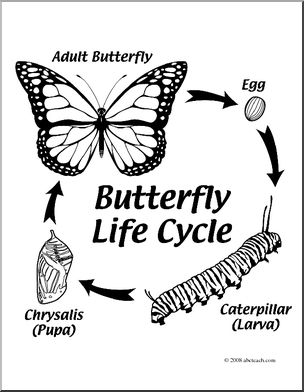 Clip Art: Butterfly Life Cycle (coloring page).