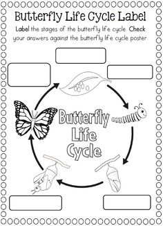 FREEBIELife cycle of a butterfly sequencing cards in color and.