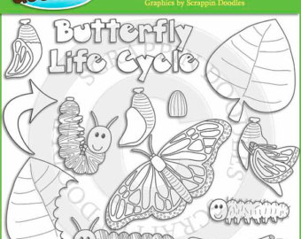 Butterfly life cycle.