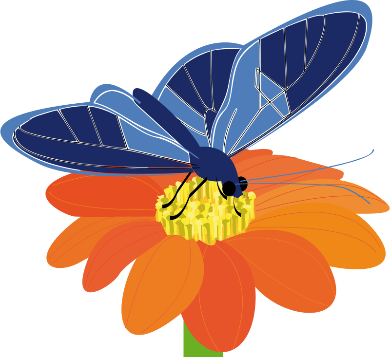 Free Clipart: Butterfly on a flower.
