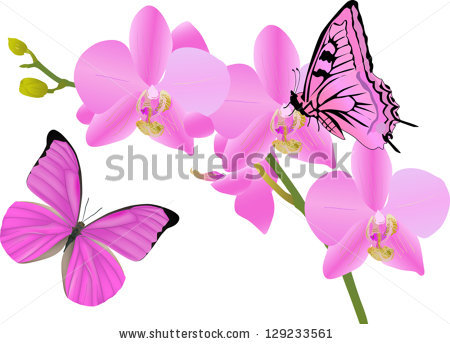 Illustration Orchid Flowers Butterflies On White Stock Vector.