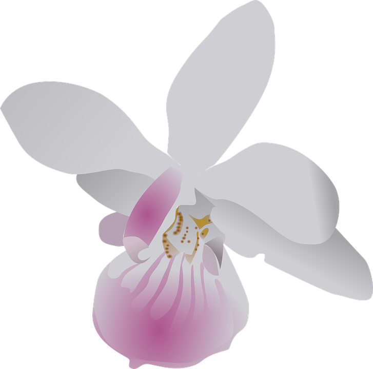 Free vector graphic: Butterfly, Orchid, Flower, Purple.