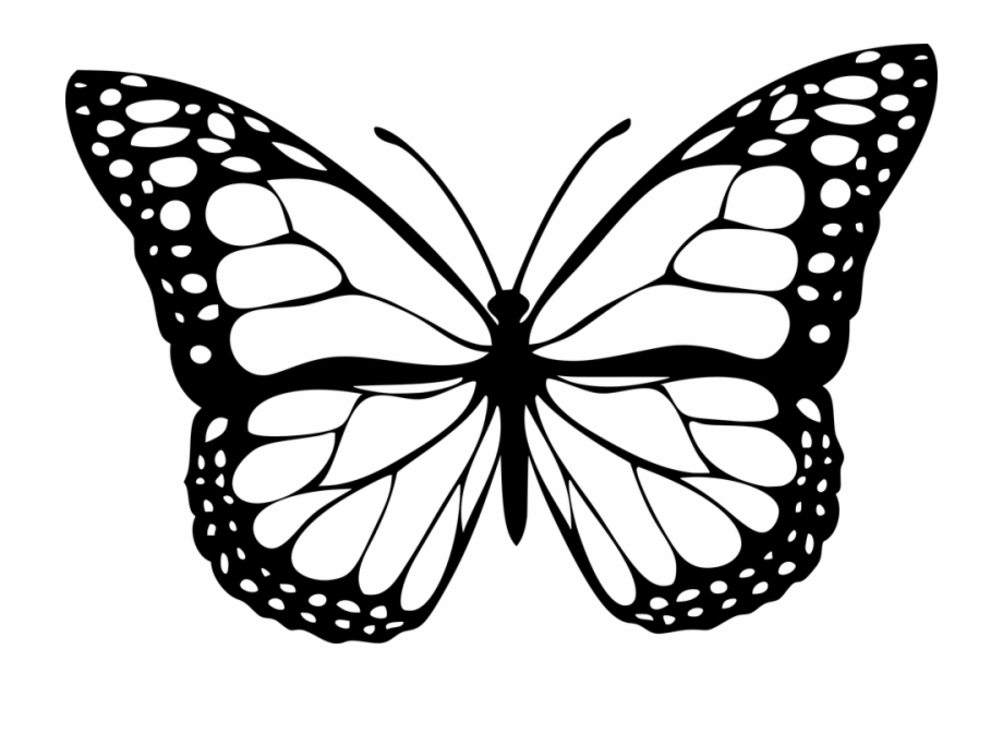 Animal, Butterfly, Design, Insect.