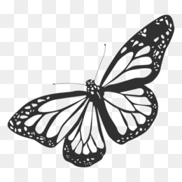 Butterfly Outline png free download.