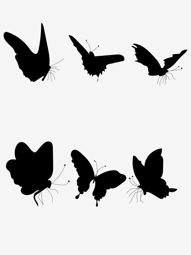 Collecting The Outline Of A Butterfly, Animal, Butterfly, Animal PNG.