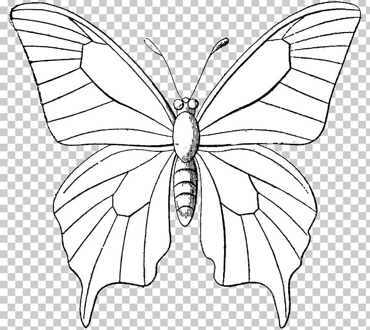 Monarch Butterfly Outline Drawing PNG, Clipart, Animal, Brush Footed.