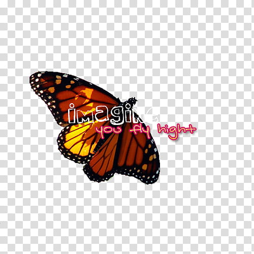 black and brown butterfly with text overlay transparent.