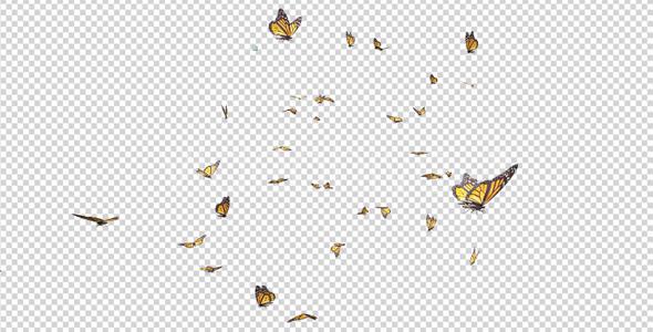 Butterfly Swarm.
