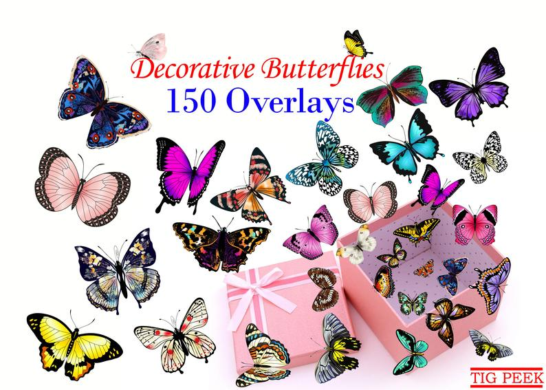 150 Butterflies Photo Overlays, Butterfly Overlays for Photoshop, Photo  overlays, PNG FILES, Digital butterflies, Color Flying Butterflies.