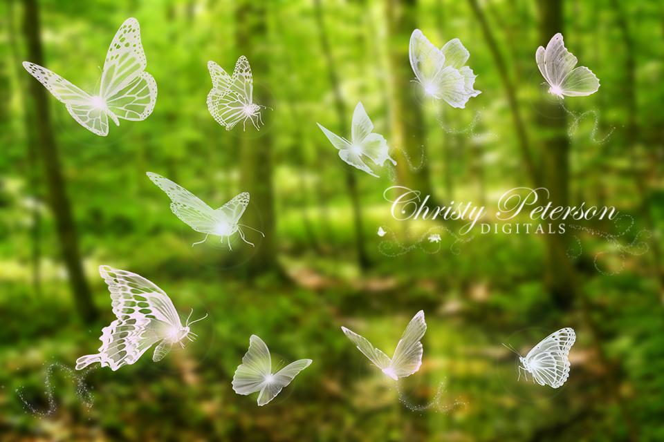 Huge set of 10 Butterflies.