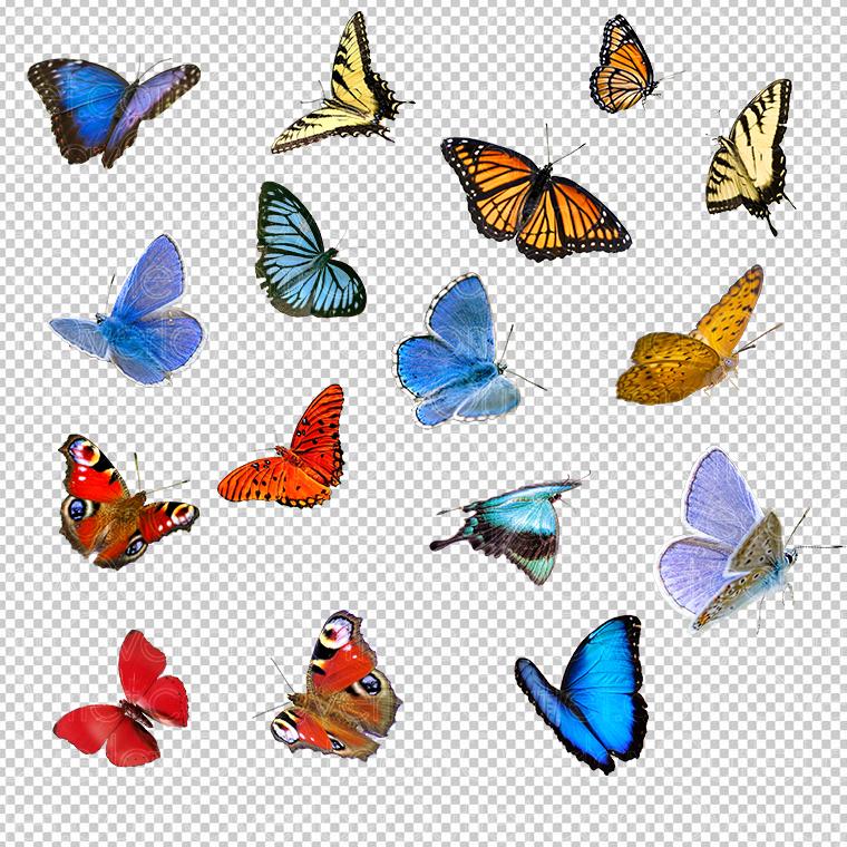 Butterflies (vol 1).