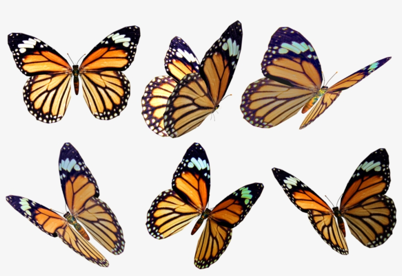 Butterflies 4 Png Stock By Roys.