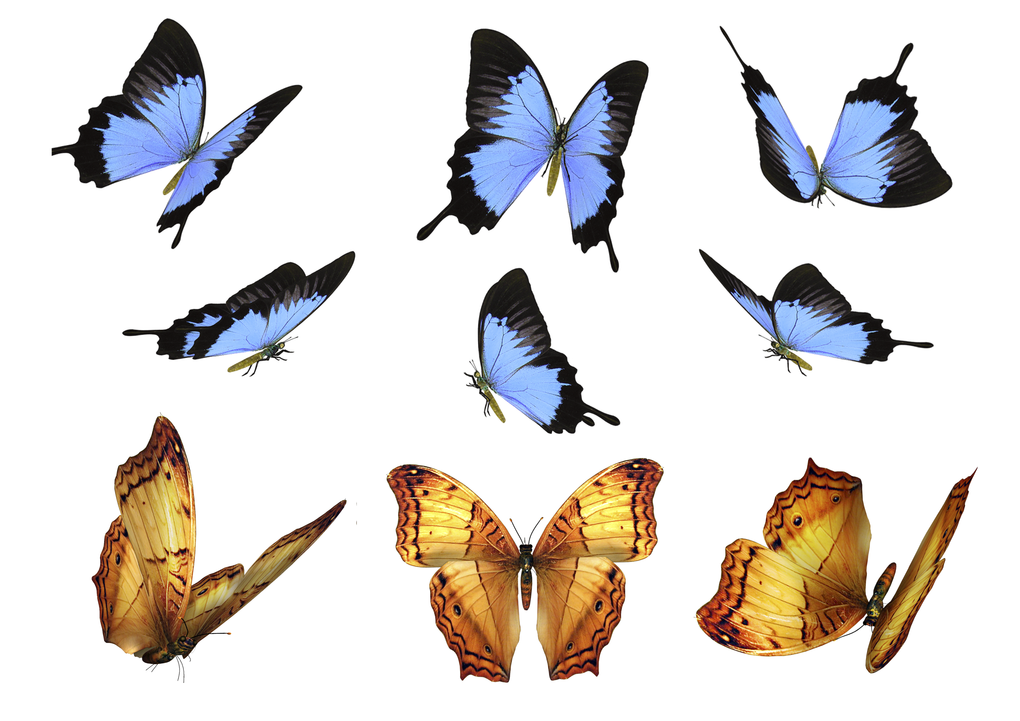 Free Butterfly Photo Overlays, Photography Overlays for Photoshop.