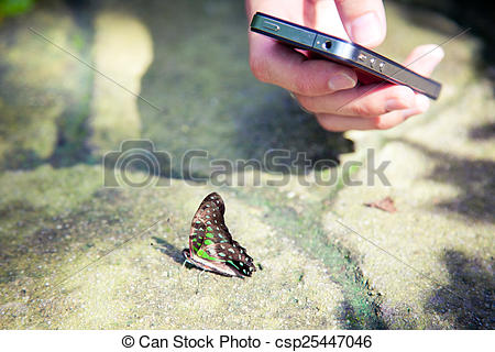 Stock Photo of Hand making picture of butterfly on mobile phone at.