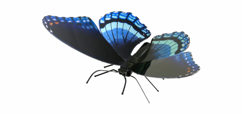 Picture Of Red Spotted Purple.