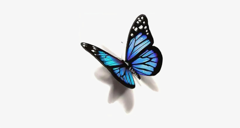 Blue Butterfly Png Photo.