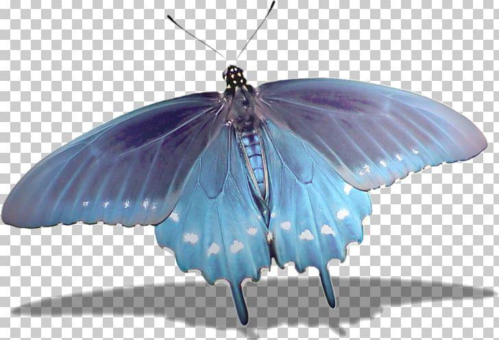Butterfly U041du0430u0442u044fu0436u043du0430.