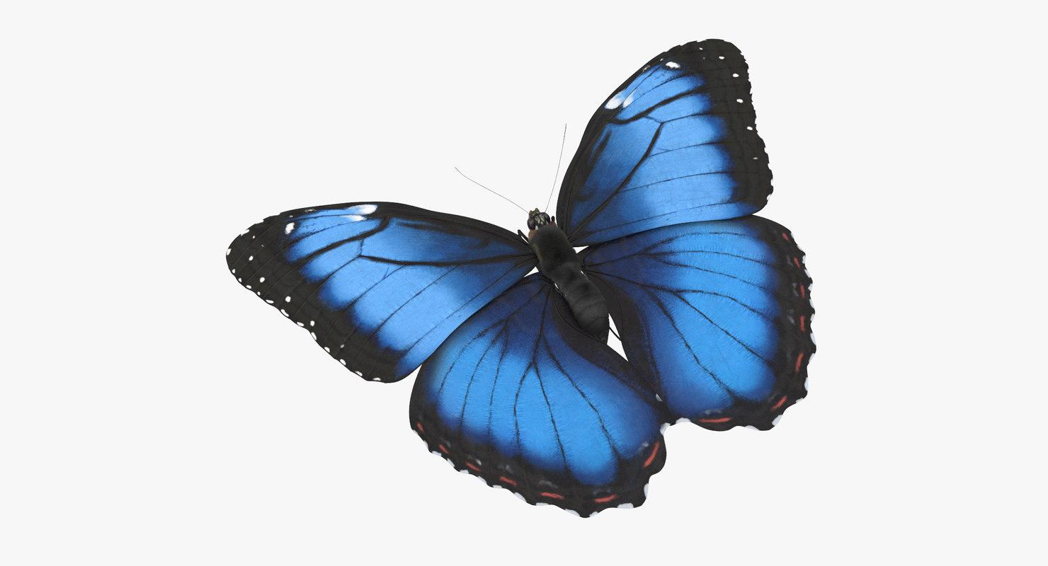 Download Free png blue morpho butterfly flying 3d model.